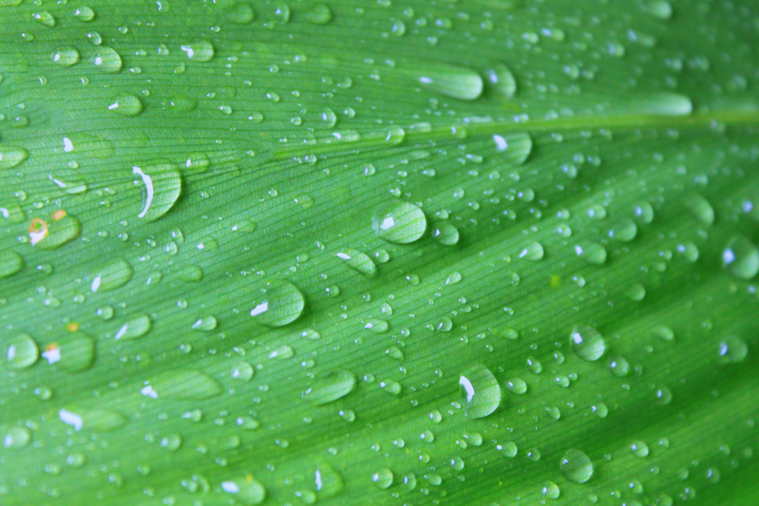 stockvault-large-leaf-after-rain127730